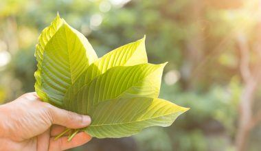 Finding The Right Kratom For You