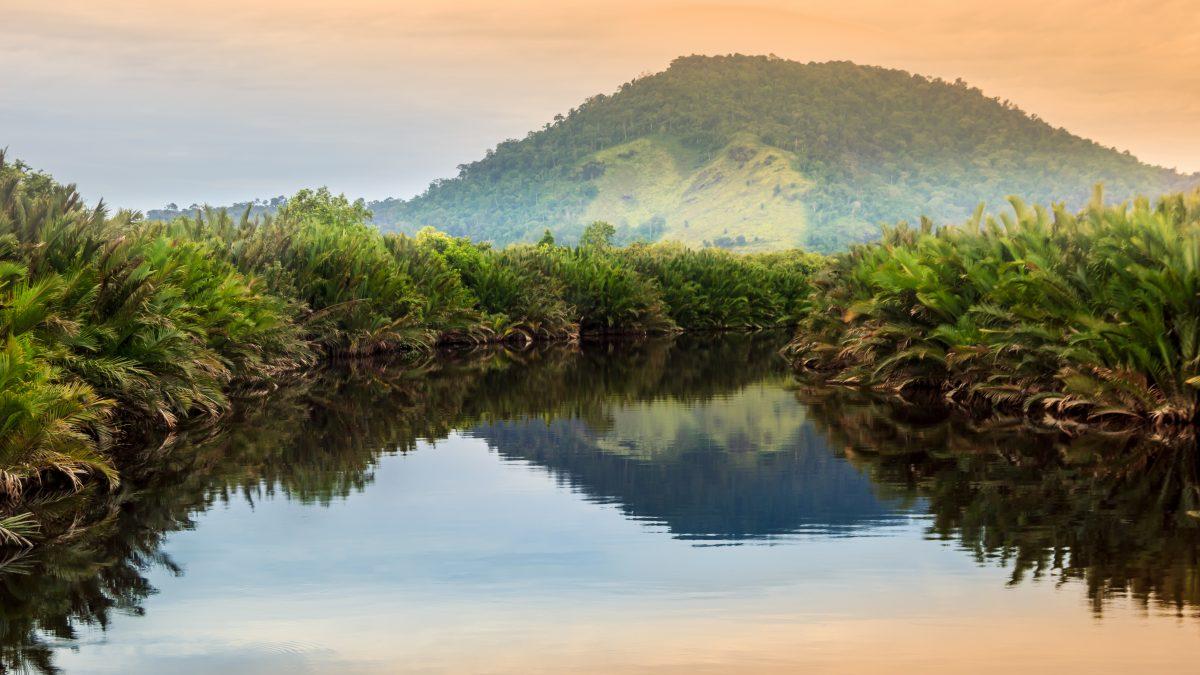 Borneo kalimantan forest